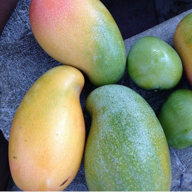mangoes of all types