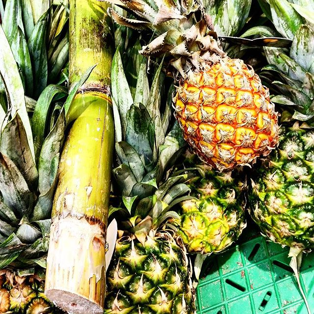 sugarcane and pineapples